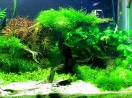 pictures of freshwater aquarium fish