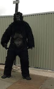 man in gorilla suit