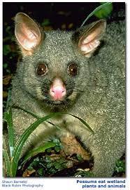 native animals in new zealand