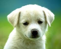 puppy dog photos