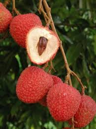 lychee picture