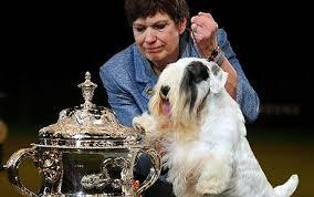 crufts winner 2009