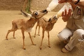 rare zoo animals