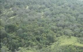 south american rainforest birds