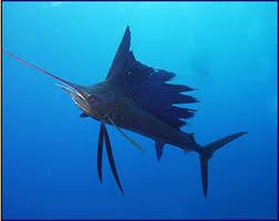 dangerous ocean animals
