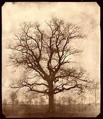 عکس درخت قهوه ای رنگ