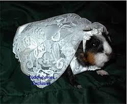 guinea pigs costumes
