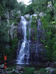 Rainforest,