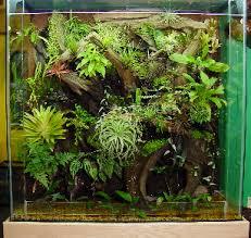 home terrarium