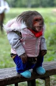 monkey cloths
