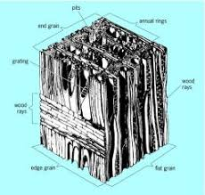hardwood cell structure