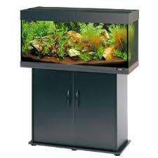 black fish tank