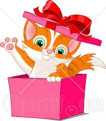 kitten gift