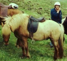 icelandic saddle