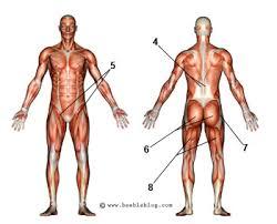 hip flexor diagram