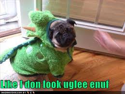 funny pugs