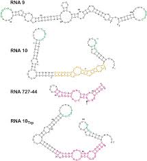 structures of rna