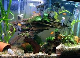 decor aquarium