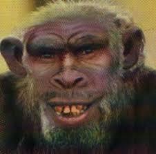 half human half chimpanzee