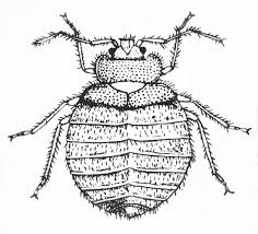 bugs drawing