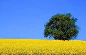 http://t0.gstatic.com/images?q=tbn:Z0rkeQo2XcnVzM:http://servagri.com/images/agriculture_champ.jpg