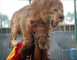 detroit lions mascot