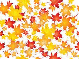 leaves falling