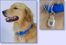 dog identity tag
