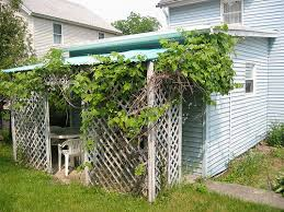 grape vine support