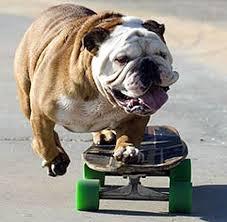 skateboarding pics