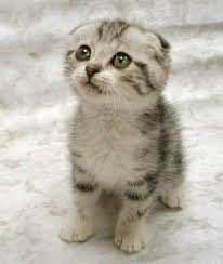 cute cats images