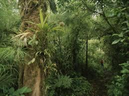 rain forest of costa rica