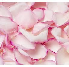 pink rose petal