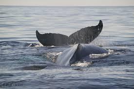 atlantic ocean animal