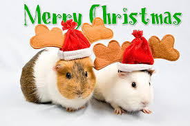 christmas animal pictures