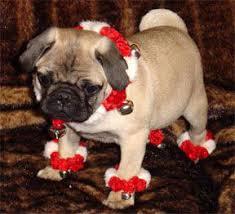 pug puppy sale