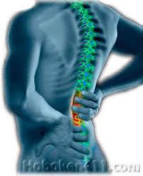 lower back vertebrae