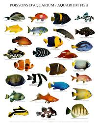 fish art pictures