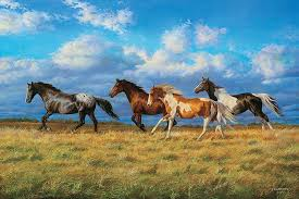 free pictures of horses