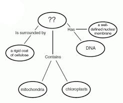concept map biology