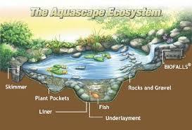 ecosystem of animals