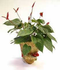 potted plant pictures