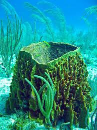 reef sponge