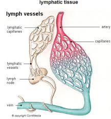 lymphatic circulation