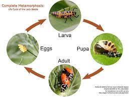 metamorphosis photos