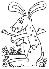 rabbit pictures for kids