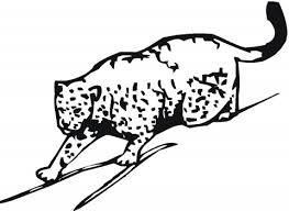 cheetah colouring pages