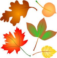 autumn leaves pics