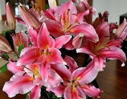 pink tiger lilies