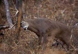 buck hunts